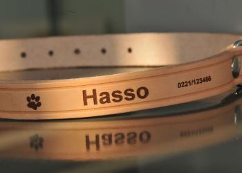 Laserbeschriftetes Leder-Hundehalsband